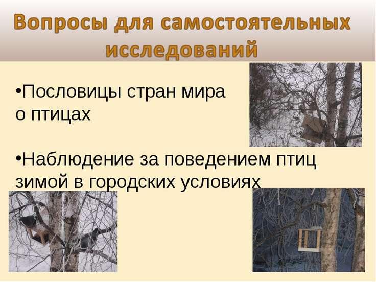 Пословицы стран мира о птицах Наблюдение за поведением птиц зимой в городских...