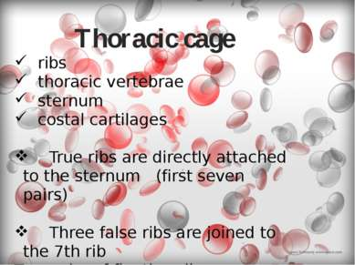 Thoracic cage ribs thoracic vertebrae sternum costal cartilages True ribs are...