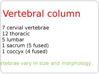 Vertebral column 7 cervial vertebrae 12 thoracic 5 lumbar 1 sacrum (5 fused) ...
