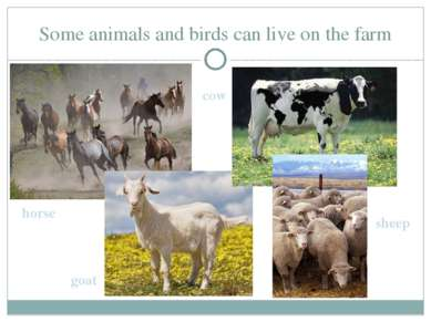 Some animals and birds can live on the farm horse cow goat sheep