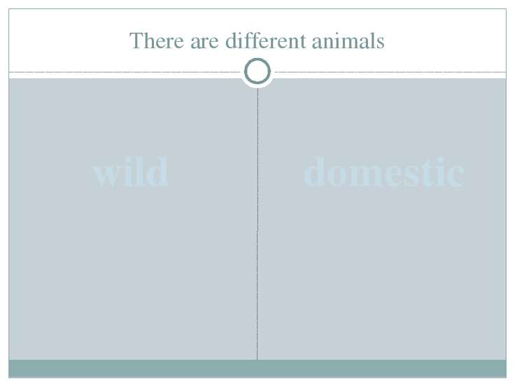 There are different animals wild domestic
