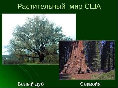 Растительный мир США Белый дуб Секвойя