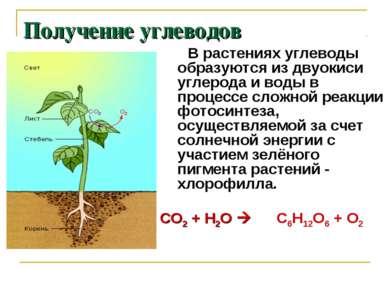 Получение углеводов В растениях углеводы образуются из двуокиси углерода и во...