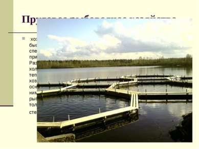 Прудовое рыбоводное хозяйство, хозяйство, разводящее быстро растущие виды ры...