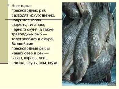 Некоторых пресноводных рыб разводят искусственно, например карпа, форель, тил...