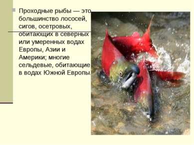 Проходные рыбы — это большинство лососей, сигов, осетровых, обитающих в север...
