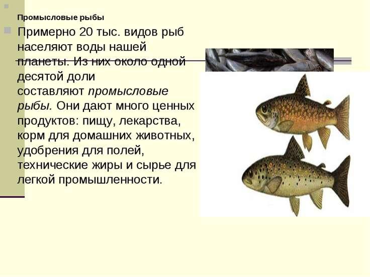 Промысловые рыбы Примерно 20 тыс. видов рыб населяют воды нашей планеты. Из н...