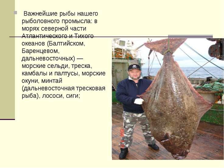 Важнейшие рыбы нашего рыболовного промысла: в морях северной части Атлантиче...