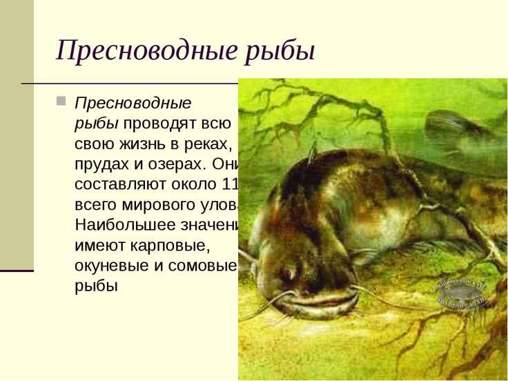 Пресноводные рыбы Пресноводные рыбыпроводят всю свою жизнь в реках, прудах ...