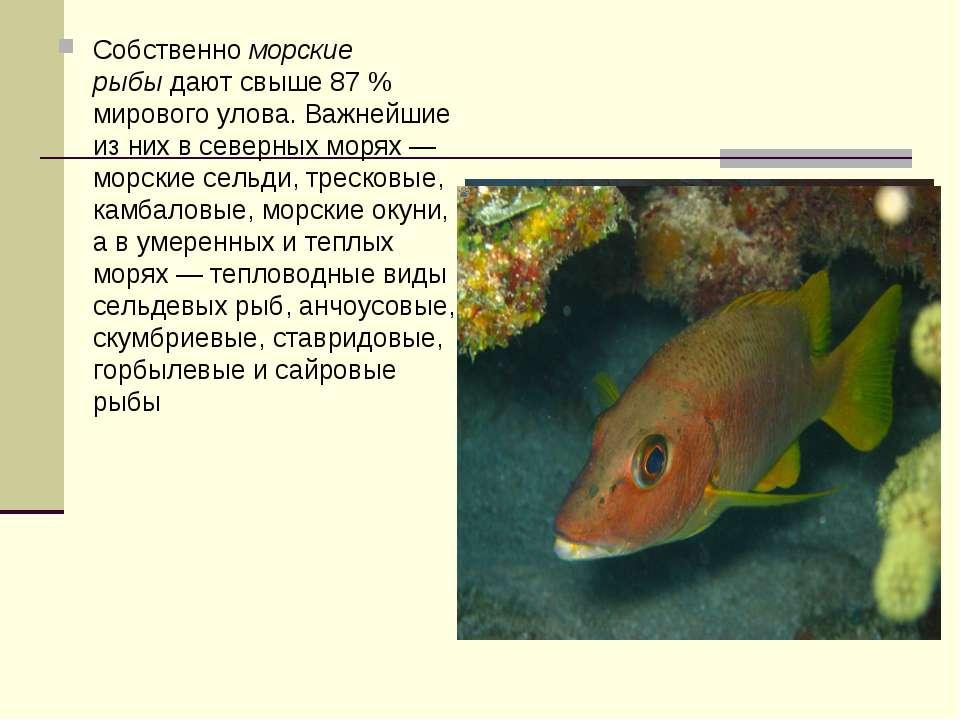 Собственноморские рыбыдают свыше 87 % мирового улова. Важнейшие из них в се...