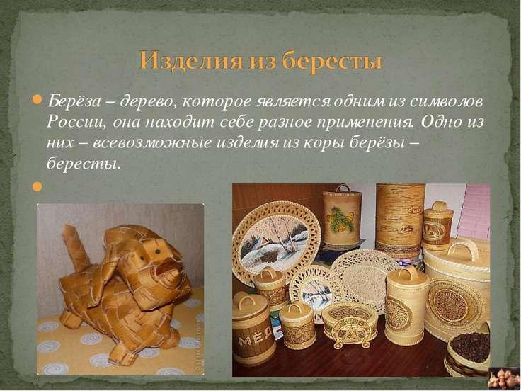 Берёза – дерево, которое является одним из символов России, она находит себе ...