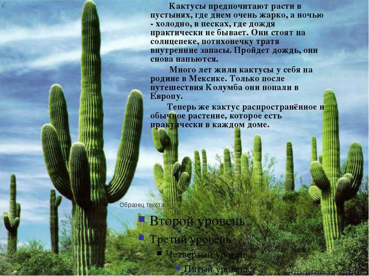 Кактусы предпочитают расти в пустынях, где днем очень жарко, а ночью - холодн...