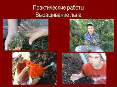 Практические работы Выращивание льна