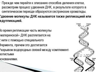Прежде чем перейти к описанию способов деления клетки, рассмотрим процесс удв...