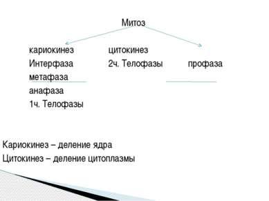 Митоз кариокинез цитокинез Интерфаза 2ч. Телофазы профаза метафаза анафаза 1ч...