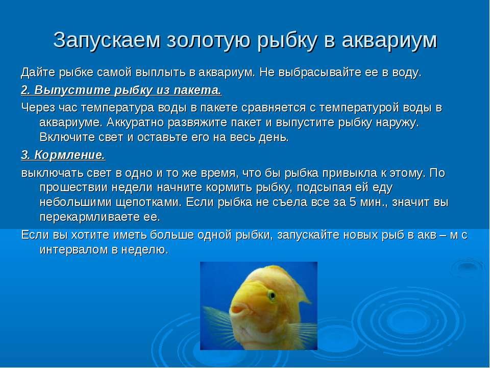Запускаем золотую рыбку в аквариум Дайте рыбке самой выплыть в аквариум. Не в...