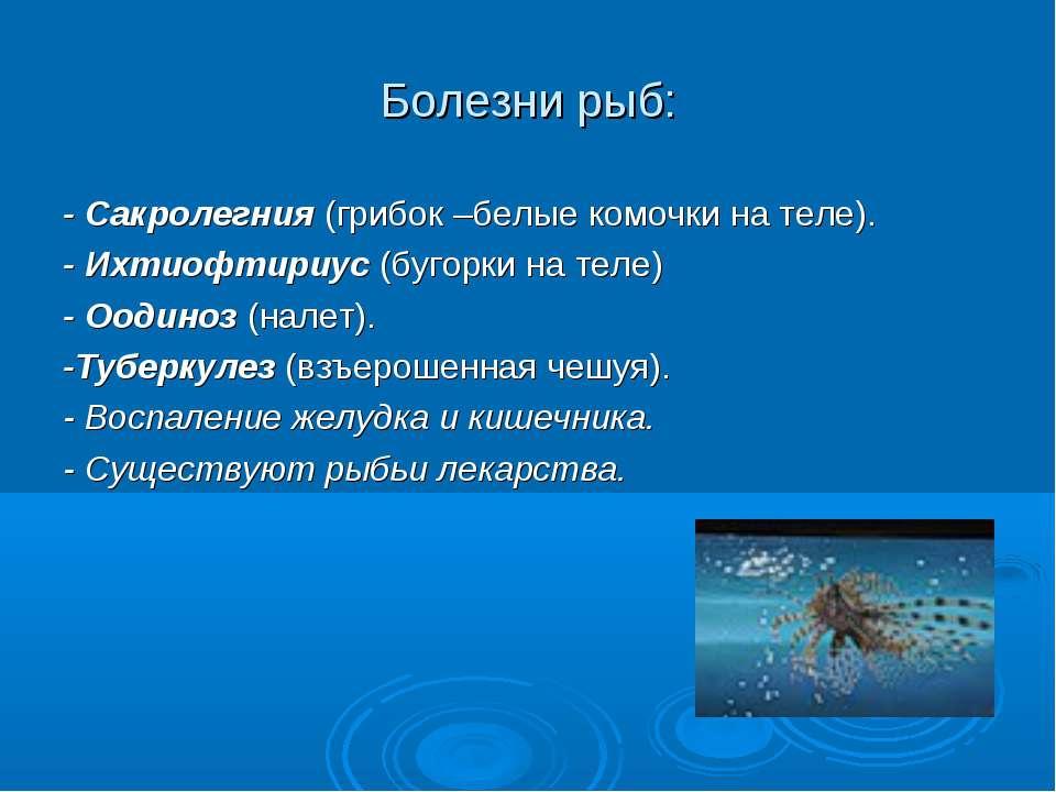 Болезни рыб: - Сакролегния (грибок –белые комочки на теле). - Ихтиофтириус (б...
