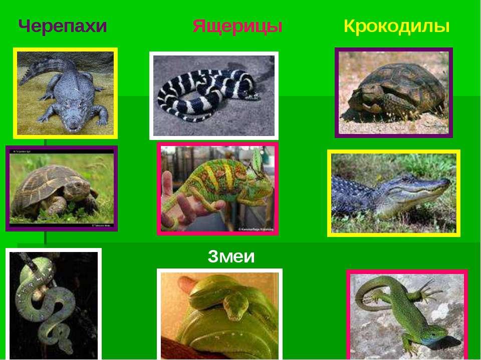 Черепахи Змеи Ящерицы Крокодилы