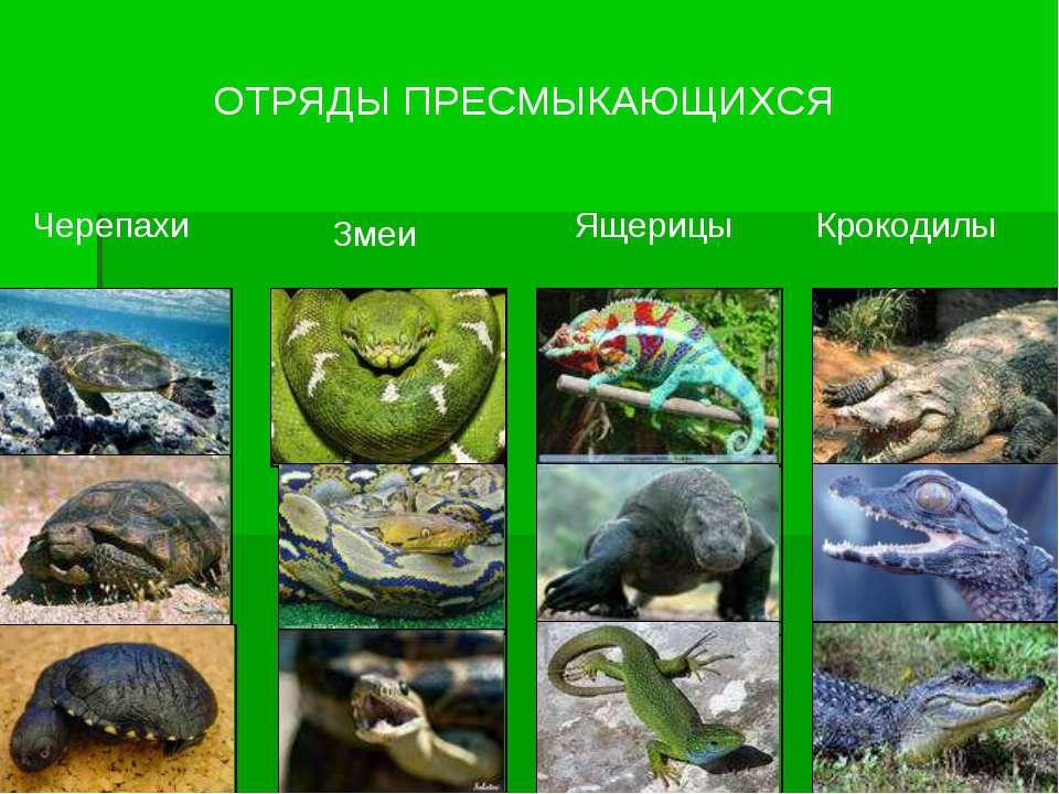 ОТРЯДЫ ПРЕСМЫКАЮЩИХСЯ Черепахи Змеи Ящерицы Крокодилы