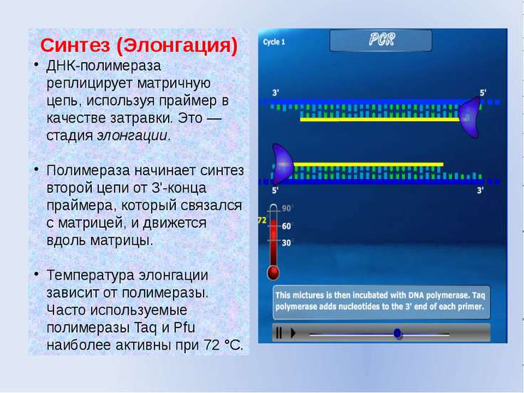 Реакция Цепная Полимеразы
