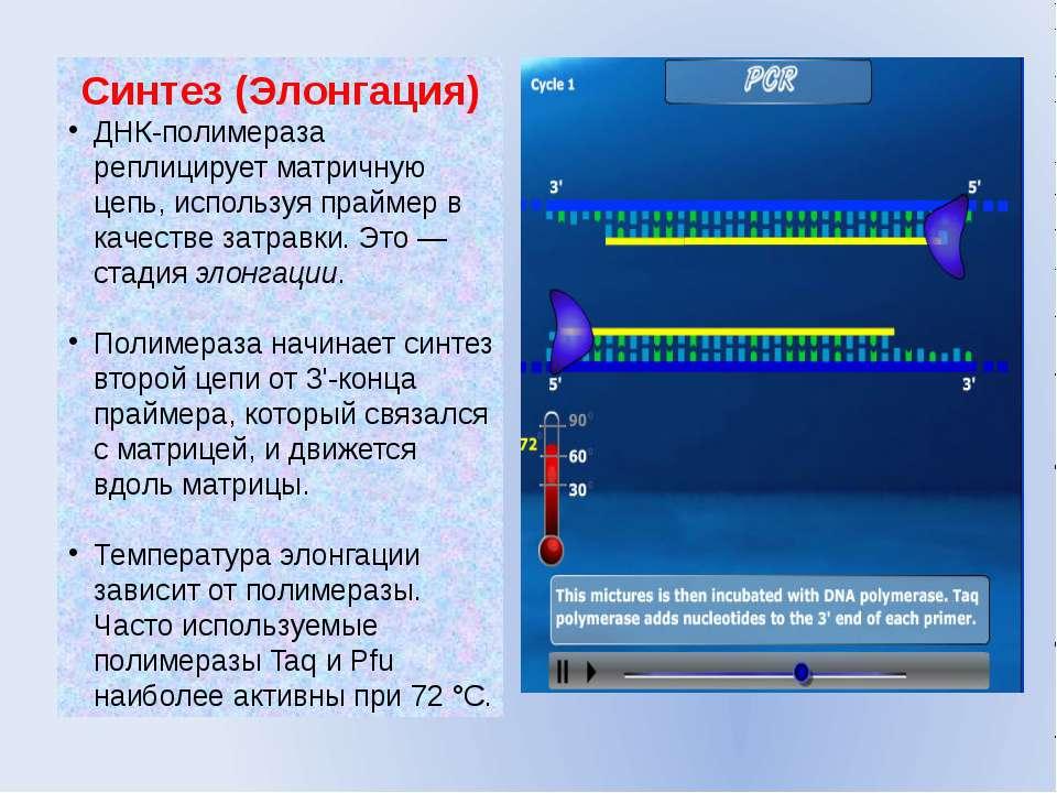 Синтез (Элонгация) ДНК-полимераза реплицирует матричную цепь, используя прайм...