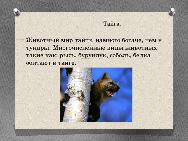 Тайга. Животный мир тайги, намного богаче, чем у тундры. Многочисленные виды ...