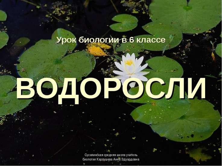 Урок биологии в 6 классе ВОДОРОСЛИ Сусанинская средняя школа учитель биологии...