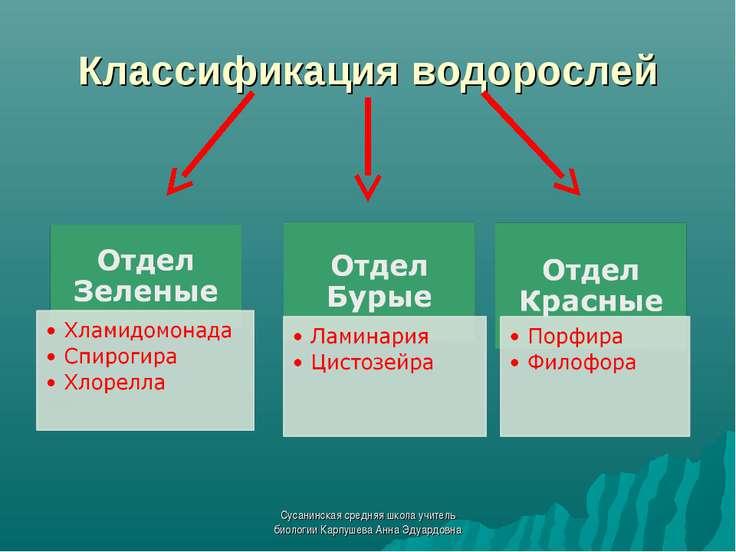 Классификация водорослей Сусанинская средняя школа учитель биологии Карпушева...