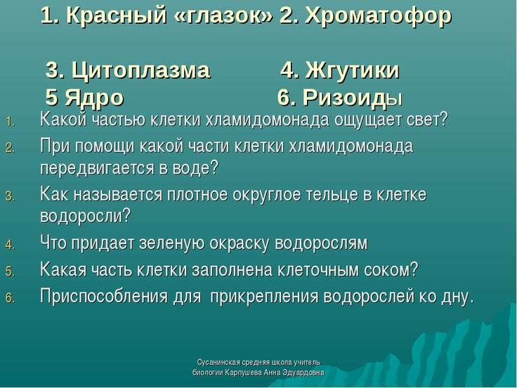 1. Красный «глазок» 2. Хроматофор 3. Цитоплазма 4. Жгутики 5 Ядро 6. РизоидЫ ...