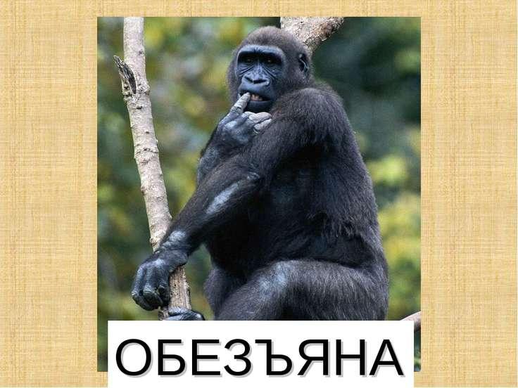 ОБЕЗЪЯНА