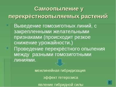 Самоопыление у перекрёстноопыляемых растений Выведение гомозиготных линий, с ...