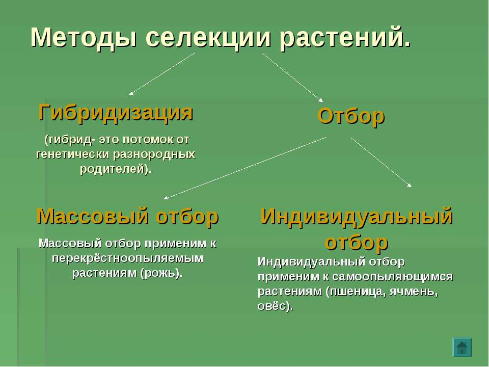 Методы селекции растений. Гибридизация (гибрид- это потомок от генетически ра...