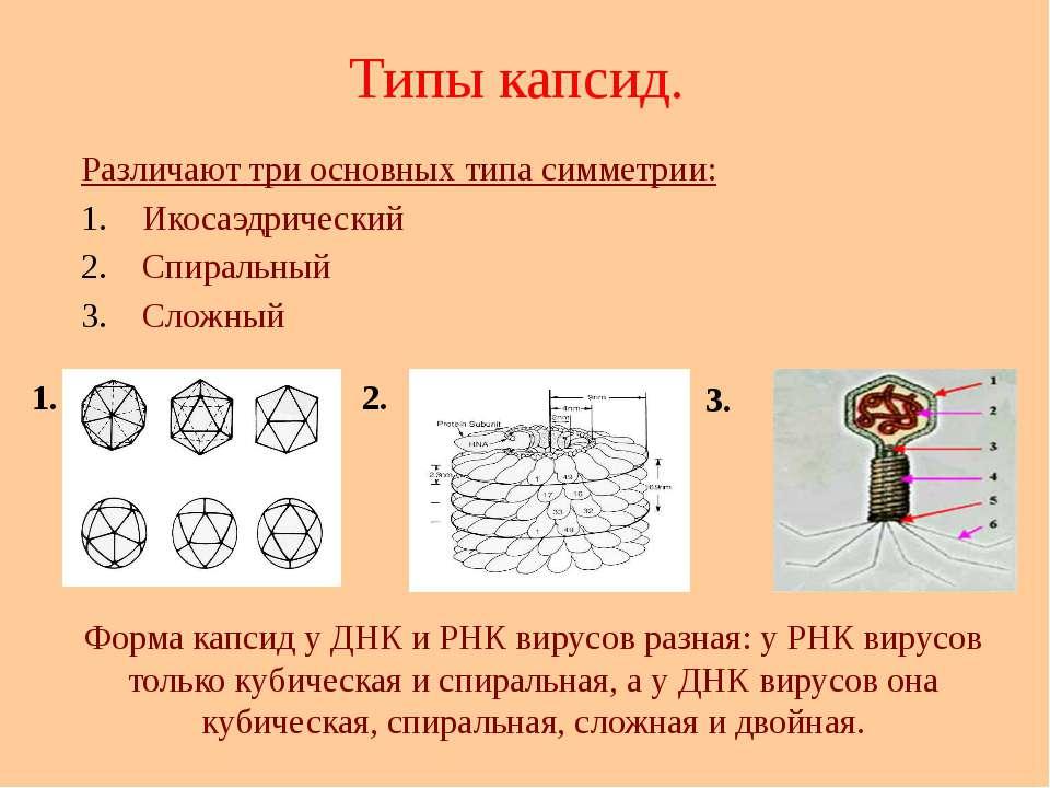 Типы капсид. Различают три основных типа симметрии: Икосаэдрический Спиральны...