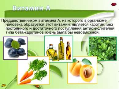 Предшественником витамина А, из которого в организме человека образуется этот...