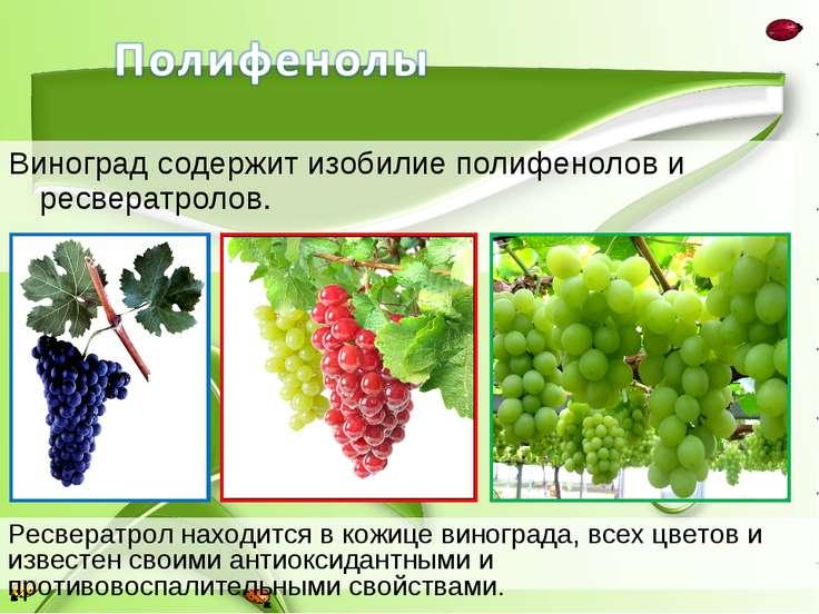 Виноград содержит изобилие полифенолов и ресвератролов. Ресвератрол находится...