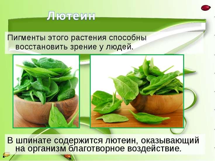 В шпинате содержится лютеин, оказывающий на организм благотворное воздействие...