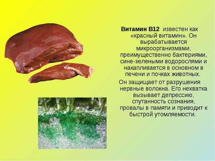 Витамин В12 известен как «красный витамин». Он вырабатывается микроорганизма...