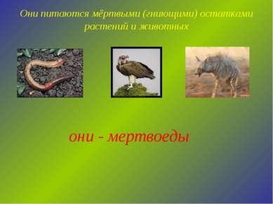 Они питаются мёртвыми (гниющими) остатками растений и животных они - мертвоеды