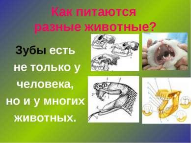 Как питаются разные животные? Зубы есть не только у человека, но и у многих ж...