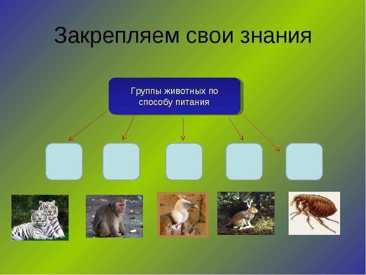 Закрепляем свои знания Группы животных по способу питания