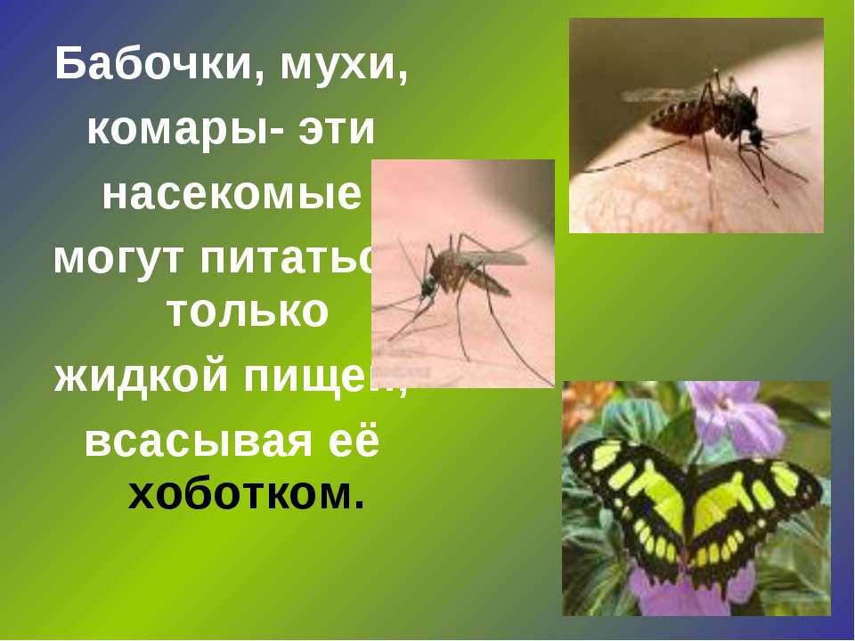 Бабочки, мухи, комары- эти насекомые могут питаться только жидкой пищей, всас...