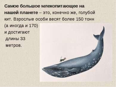 Самое большое млекопитающее на нашей планете – это, конечно же, голубой кит. ...