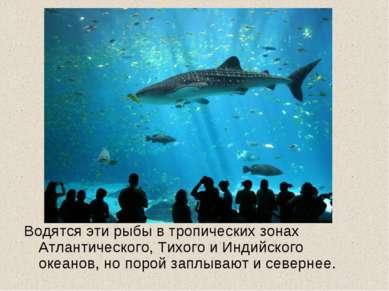 Водятся эти рыбы в тропических зонах Атлантического, Тихого и Индийского океа...