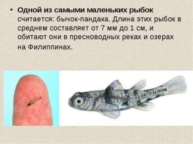 Одной из самыми маленьких рыбок считается: бычок-пандака. Длина этих рыбок в ...