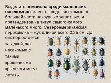 Выделить чемпиона среди маленьких насекомых нелегко – ведь насекомые по больш...