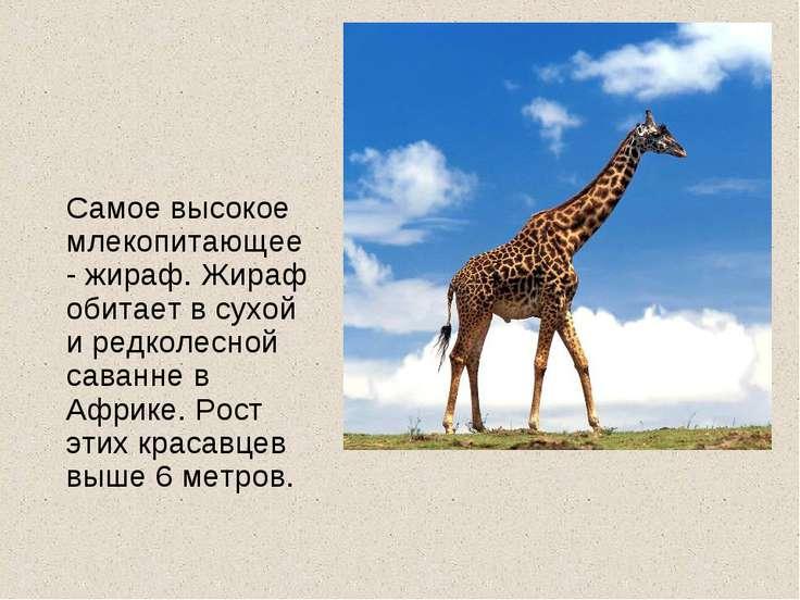 Самое высокое млекопитающее- жираф. Жираф обитает в сухой и редколесной саван...