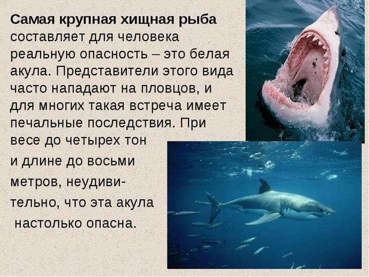 Самая крупная хищная рыба составляет для человека реальную опасность – это бе...