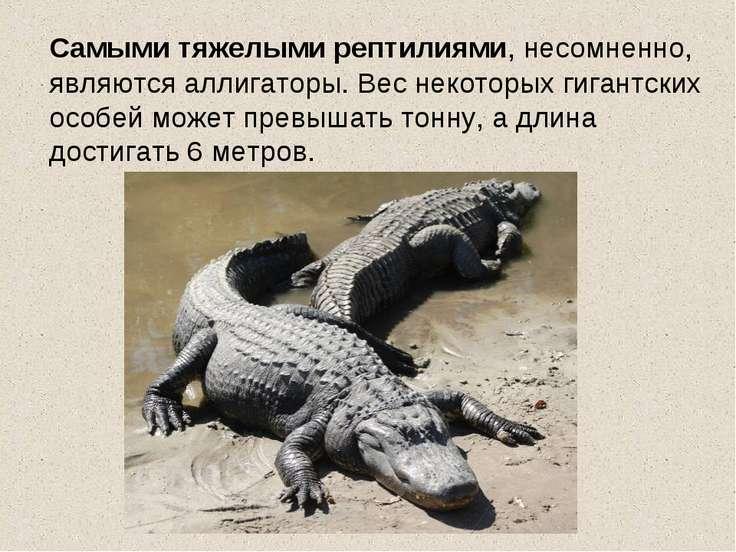 Самыми тяжелыми рептилиями, несомненно, являются аллигаторы. Вес некоторых ги...