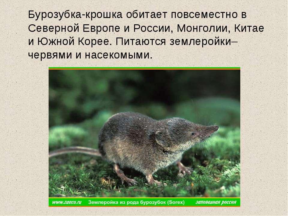 Бурозубка-крошка обитает повсеместно в Северной Европе и России, Монголии, Ки...