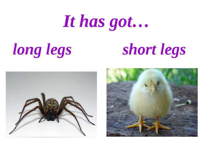 It has got… long legs short legs
